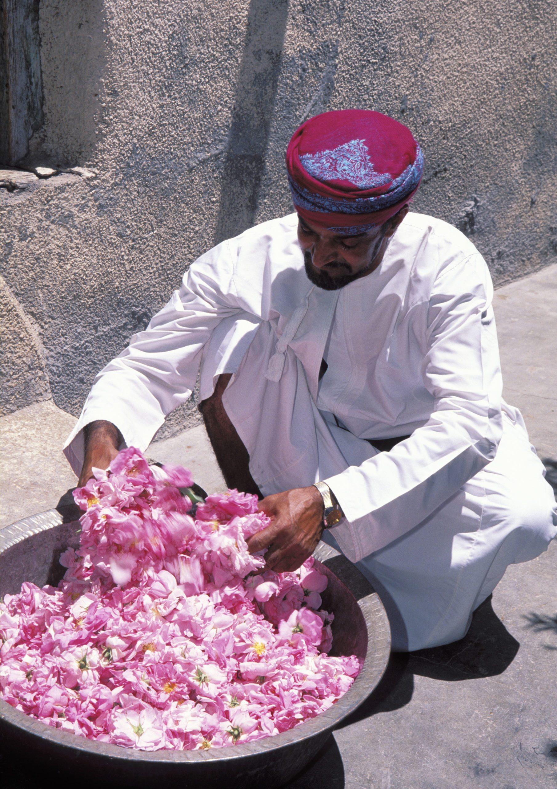 Oman Rosenernte