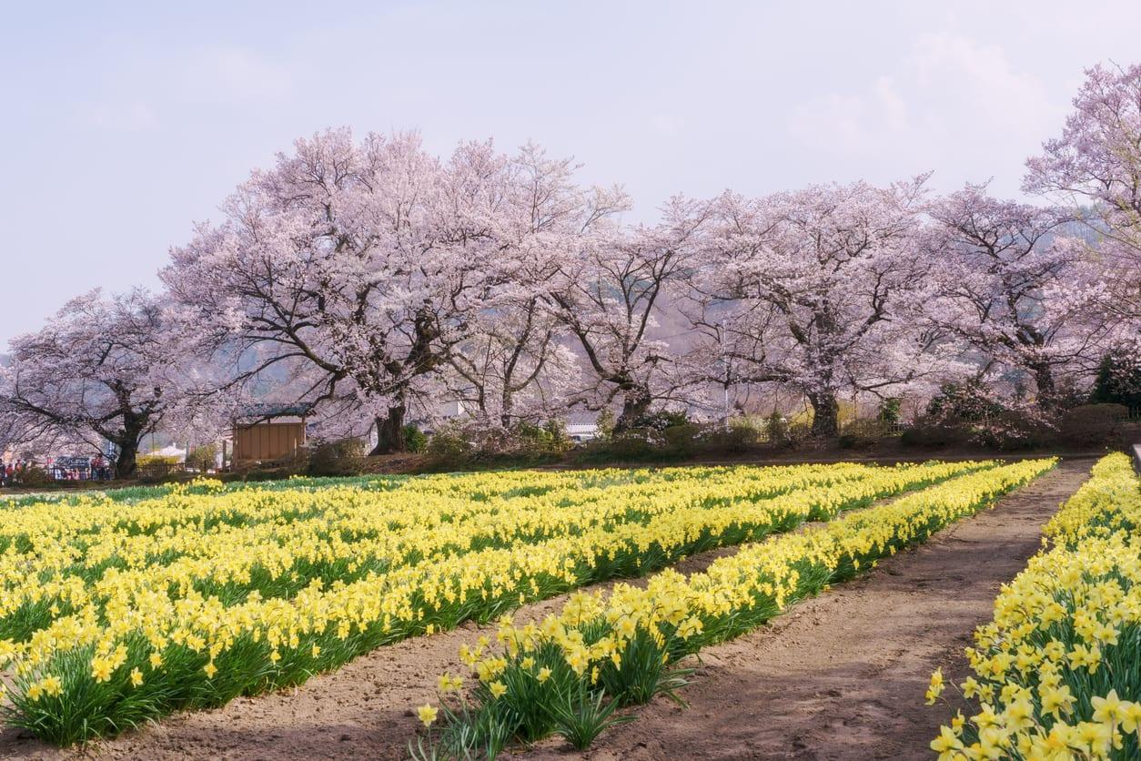 Natur, Blumen und bäume stellt uns ihre unbegrenzter Farbpalette zur Verfügung.